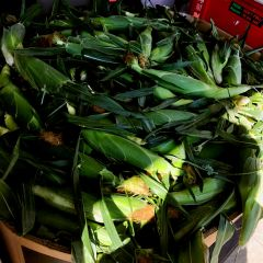 Veg_Local Chiliwach Super sweet Corn 6 counts 本地Chiliwach双色甜玉米6根