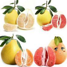 Special Pomelo Box 【4颗装】琯溪彩柚限量版礼盒箱
