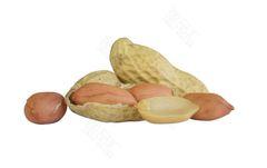 GRAIN_Fresh Peanuts 10 lbs 新鲜花生10磅袋