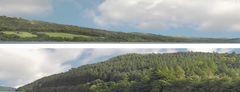 ID201B Forest Hills Backscene Any Scale (Standard or self-adhesive)
