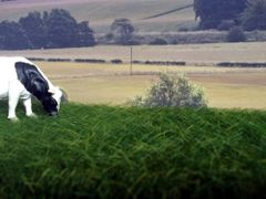 12mm Dark Green Grass Mat by Noch N00414