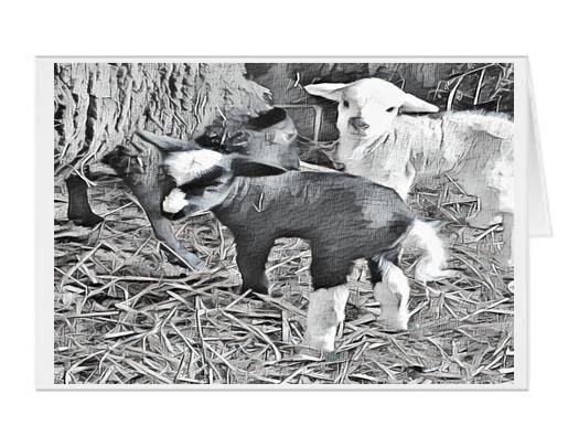 #F48| Around The Farm Greeting Cards | Baby Lambs Twin Girls
