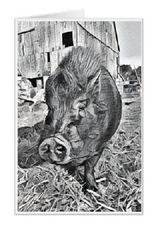 #F31| Around The Farm Greeting Cards | Bubba The Pot Belly Pig