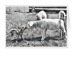 #F49| Around The Farm Greeting Cards | Chihuahua and Lamb Noses