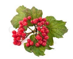 Granny's Cranny - Tisane (Herbal)