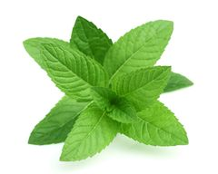 Organic Peppermint Willamette - Herbal (Tisane)