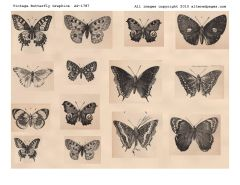1787 Butterfly Graphics Digi Stamp