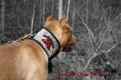 Southern Cross Kevlar Protective Dog Cut Collar