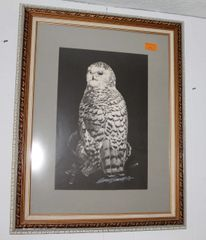 Signed and Framed Owl Print