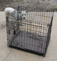 Four Paws Fold Up Black Wire Kennel w/ Tray and 2 Doors