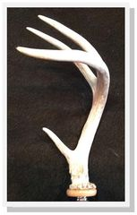 Large Whitetail Deer Antler Wine Bottle Stopper