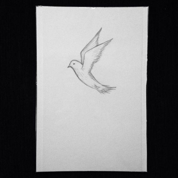 """Dove 9x6"""" graphite drawing"""