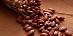 Roasted California Almond Oil