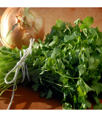 Cilantro and Roasted Onion Infused Olive Oil