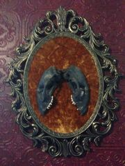 Framed Racoon Skull