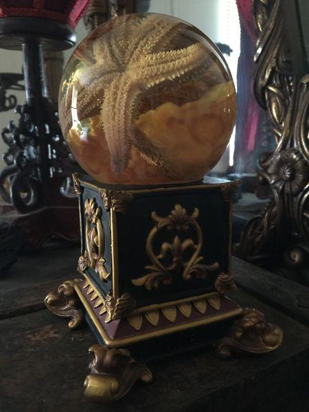 Sold Preserved Starfish and Jellyfish