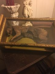 Sold Mummified Cat Specimen