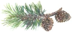 12 Printed Place Cards with Two Pine Cones