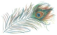 12 Printed Peacock Feather Place Cards