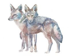 Original Watercolor - Coyote Pair- SOLD