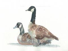 Original Watercolor - Geese resting- SOLD