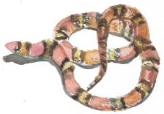 12 Printed Swirling Snake Place Cards