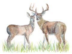 Original Watercolor - Deer Couple