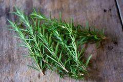 110 Rosemary Small Spray