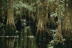 16 Cypresswood Medium Gel