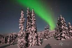 48 Alaskan Wilderness Small Spray