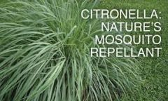 60 Citronella Small Gel