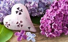 42 Lilac Small Spray