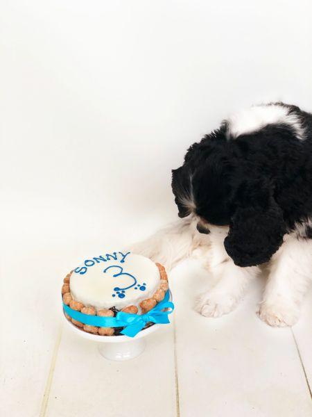 Dog Birthday Cake From Arton Co Bakery In Preston