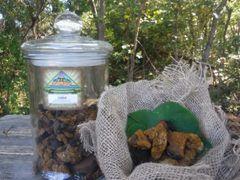 Chaga Mushroom Powder, Dried