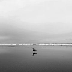 Seagull at Manzanita