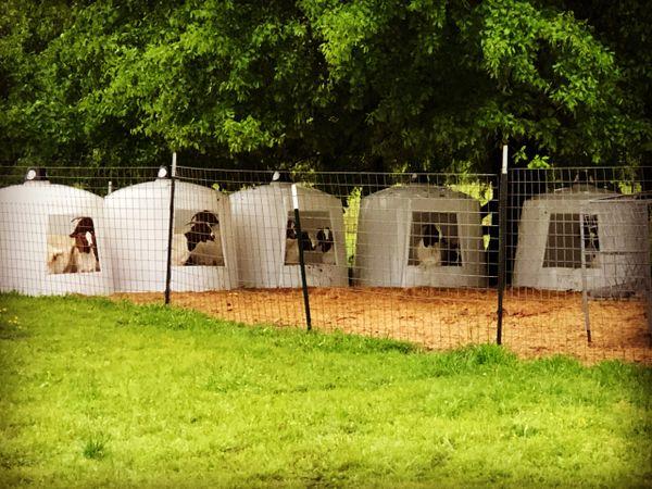 Polydome Animal Huts