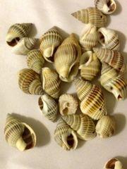 1563. 3D Shell Pendant