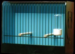 GENTLY USED Wooden Show Cages - Finch & Colorbred Canary - Refurbished