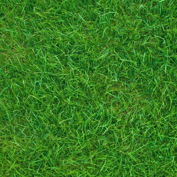 Grass Standard Nature Print