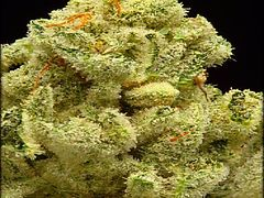 Chemdawg Grade A(Indica)