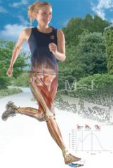 Getting Your Gait Straight - 3 Hour LIVE WEBINAR -THURSDAY JULY 12, 2018 6pm - 9pm EST