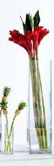 Clear-Rota Vase