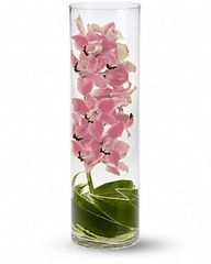 Clear-Cylinder Vases
