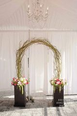Curly Willow Arch