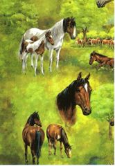 Horse Gift Wrapping Paper - Six Foot Sheet