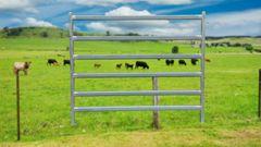 2.1m Heavy Duty Cattle Panels