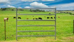 2.1m Cattle Panel