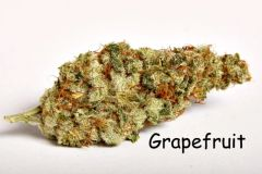 Grapefruit - 1/4 oz