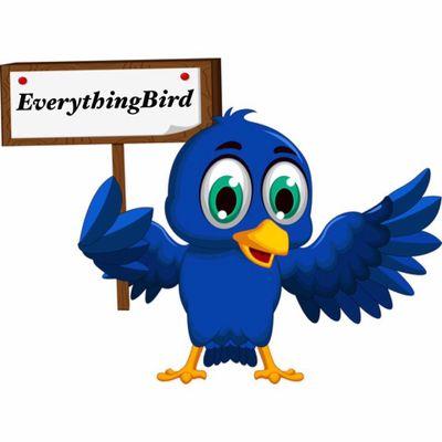 EverythingBird