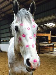 Birthday Card: Horse with smooches all over his face!!! - Item# GC B Kiss